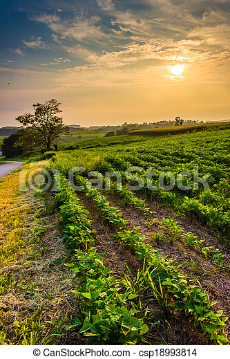 Sunset over farm fields in rural York County, Pennsylvania.  - csp18993814