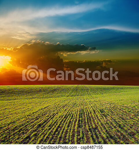 sunset over field - csp8487155