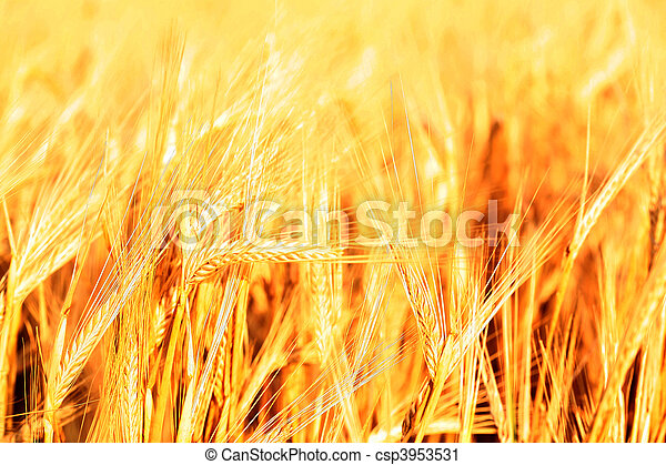 Sunset over field with green grass  - csp3953531