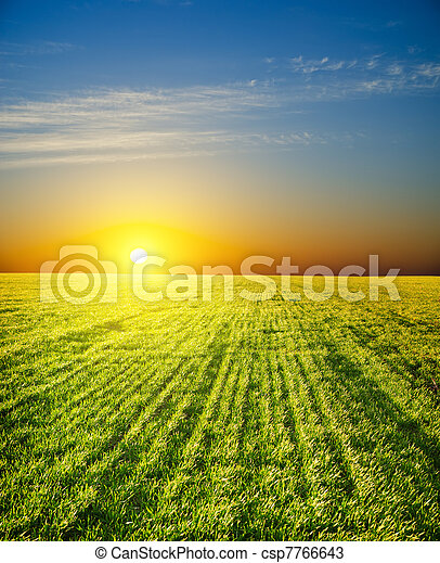 sunset over field with green grass - csp7766643