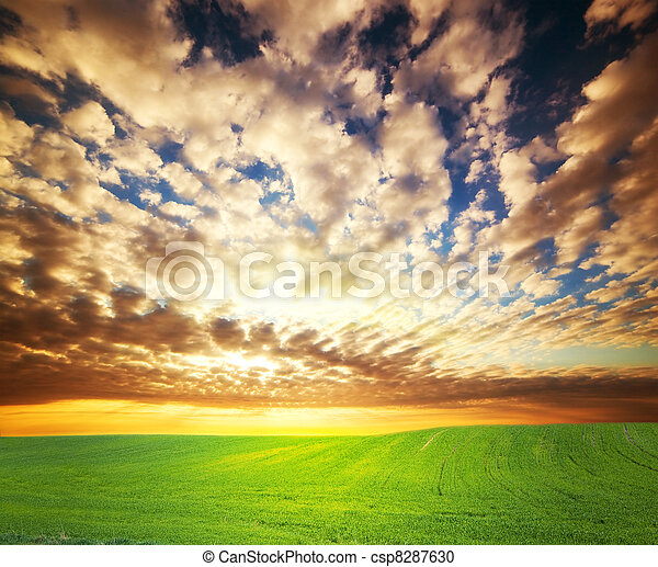 Sunset over green grass field - csp8287630