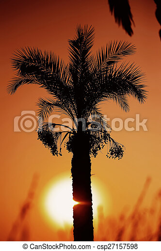 sunset over palm tree - csp27157598