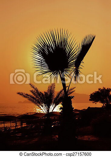 Sunset over palm tree - csp27157600