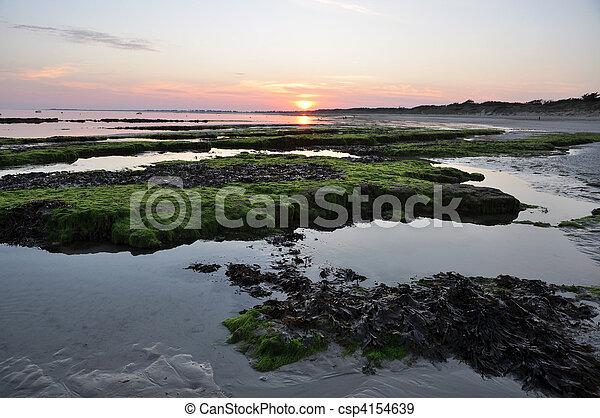 Sunset over seaweed rocks - csp4154639