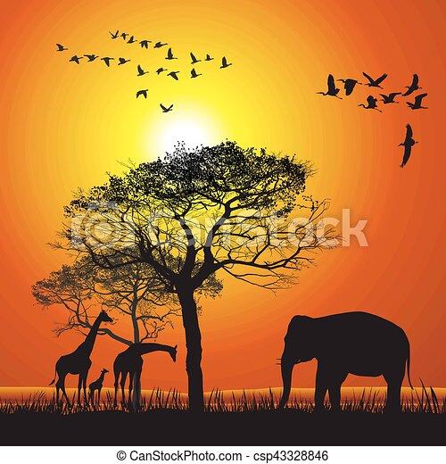 Sunset over the safari - csp43328846