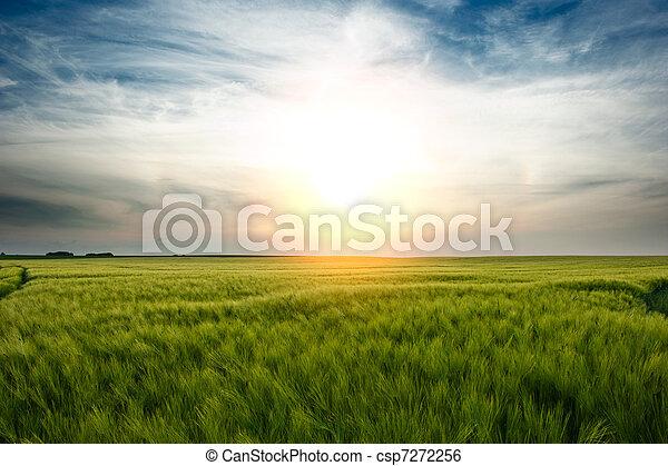Sunset over wheat field - csp7272256