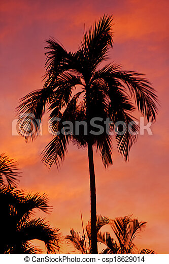 Sunset Palm Tree - csp18629014