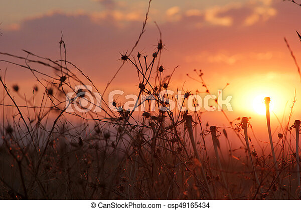 Sunset - csp49165434