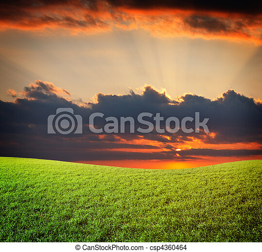 Sunset sun and field of green fresh grass under blue sky - csp4360464