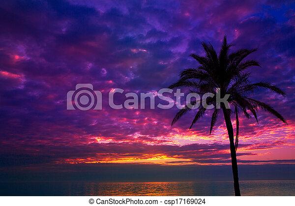 sunset sunrise palm tree over Mediterranean - csp17169024