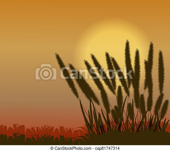 Sunset with grass flower in nature - csp81747314