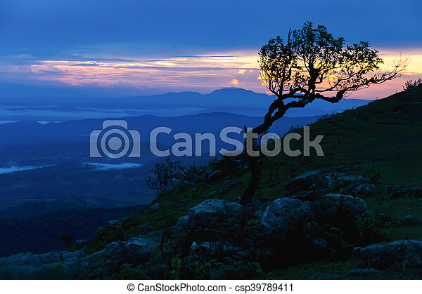 Sunset with silhouette tree on high mountain - csp39789411