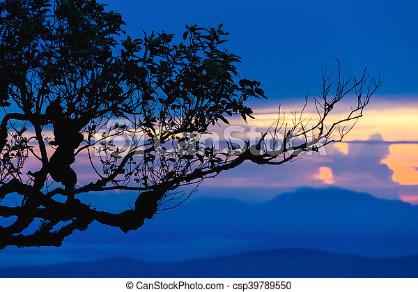 Sunset with silhouette tree on high mountain - csp39789550