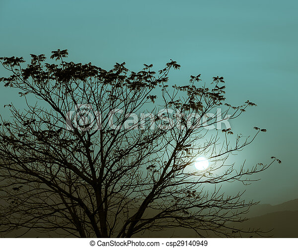 Sunset with silhouette tree - csp29140949
