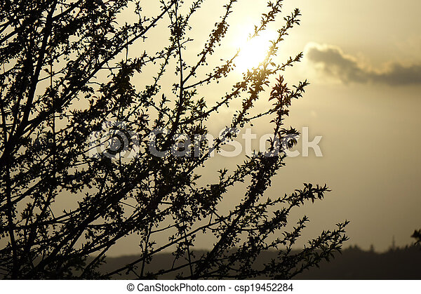 Sunset with tree silhouette - csp19452284