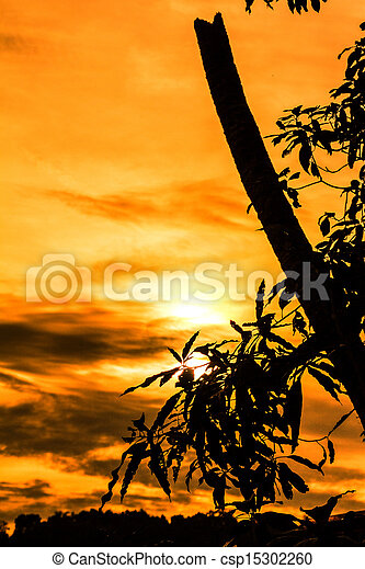 Sunsets - csp15302260