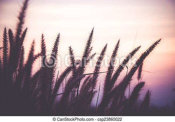 sunsets - csp23860022