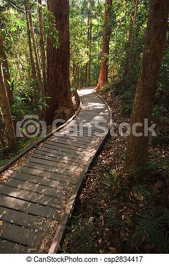 Sunshine breaking thru on wooden boardwalk in the rain forest - csp2834417