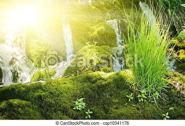 Sunshine in a forest - csp10341176