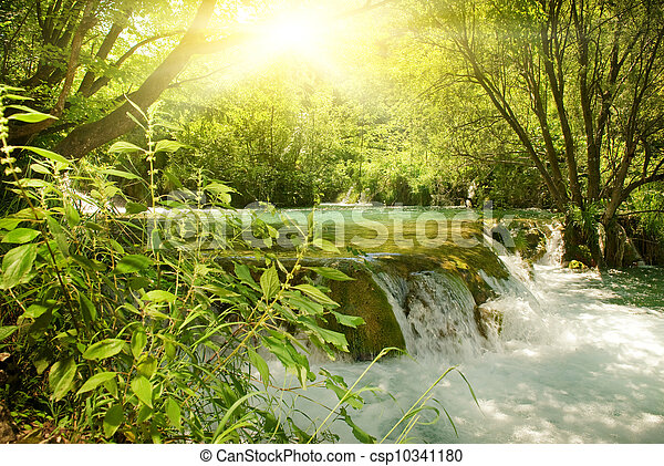 Sunshine in a forest - csp10341180