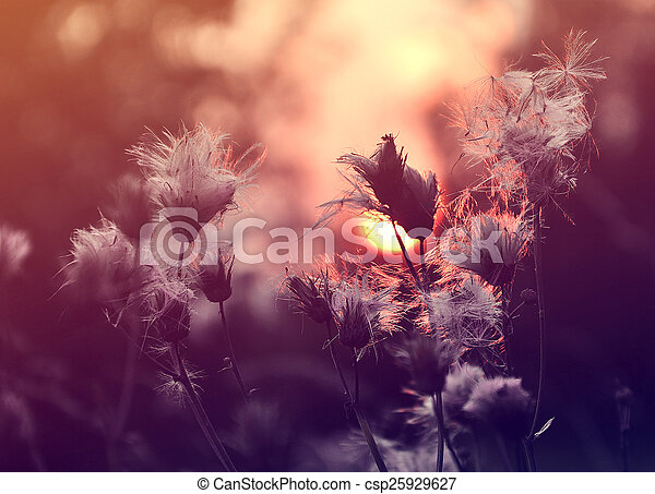 Sunshine - csp25929627