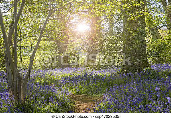 Sunshine through the leaves in bluebell woods in Dorset - csp47029535