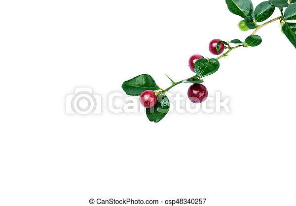 Super fruit on white background - csp48340257
