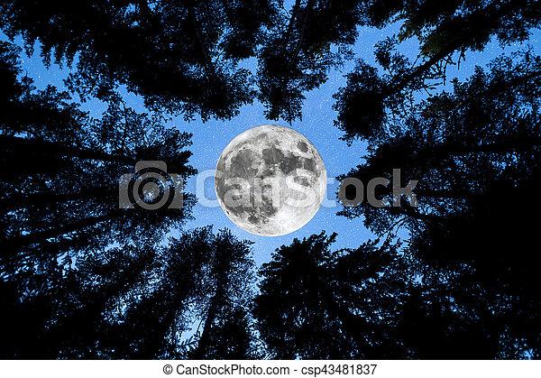 Super Moon Pine trees silhouette - csp43481837