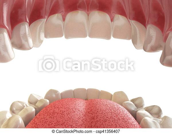 Superior, más bajo, o, boca, dientes humanos, jaw., abierto ...