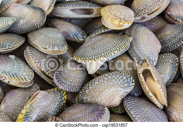 clam Short naked