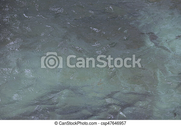 surface of the water. - csp47646957