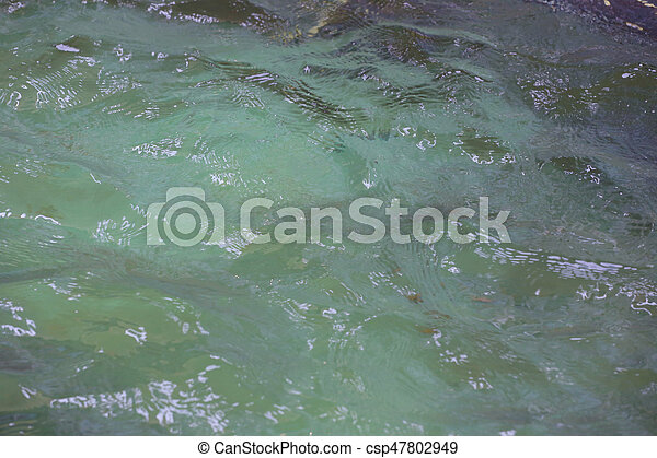 surface of the water. - csp47802949
