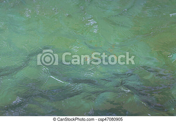 surface of the water. - csp47080905