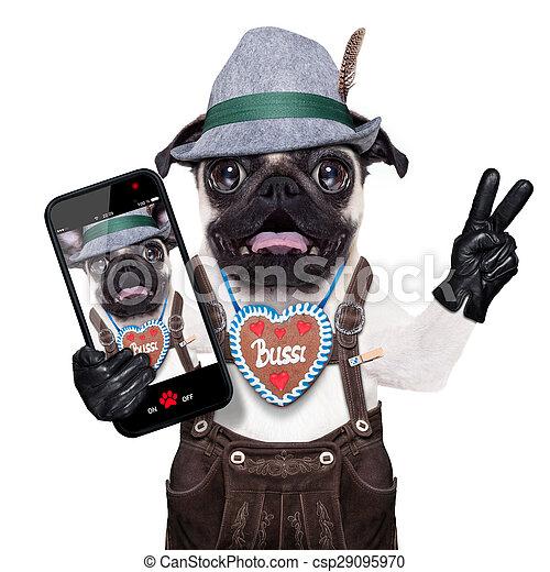 surpris, fou, bavarois, chien - csp29095970