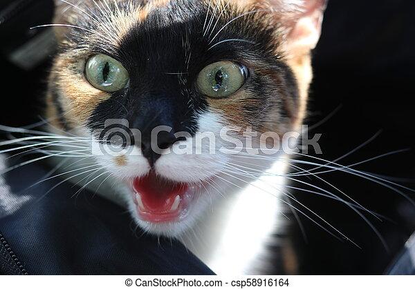 surprised cat look - csp58916164