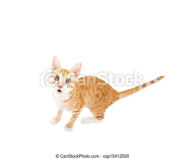 surprised cat looking at camera - csp15412500