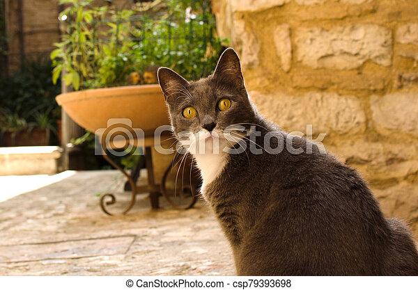 Surprised cat on medieval street - csp79393698