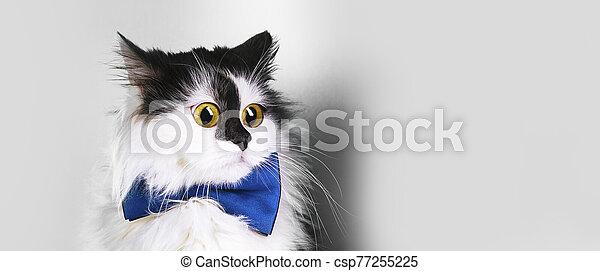 surprised cat panoramic - csp77255225