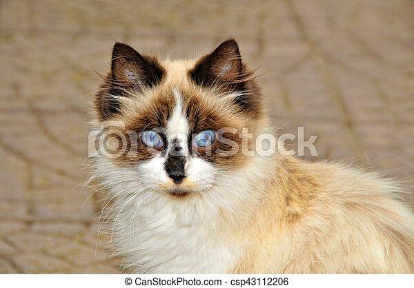surprised cat - csp43112206