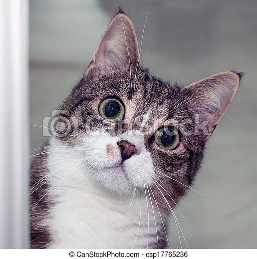 Surprised cat - csp17765236