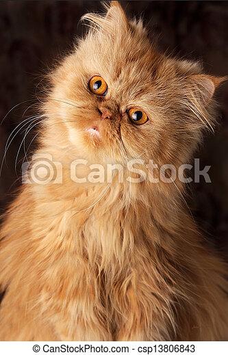 surprised Persian cat - csp13806843