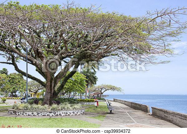 Suva Town Parks - csp39934372