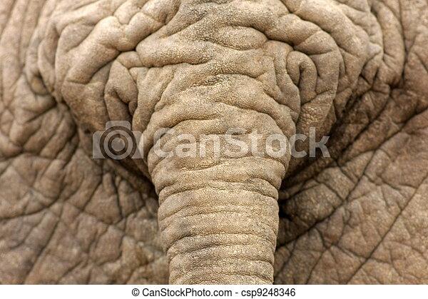 Hur stor är elefant penis
