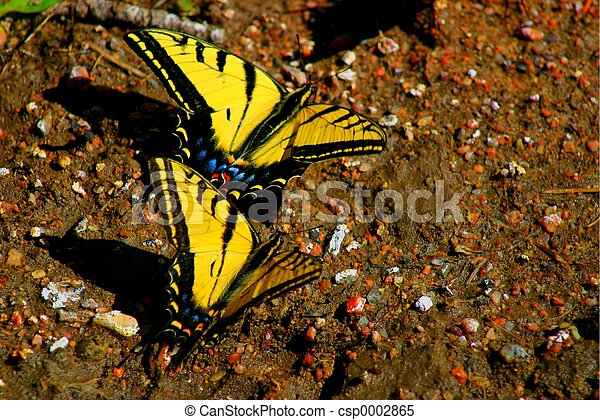 Swallowtails 4538 - csp0002865