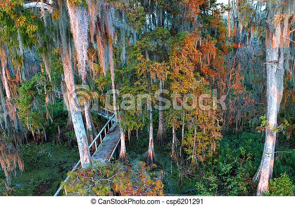 Swamp Boardwalk - Florida - csp6201291