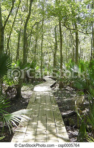 Swamp Walk - csp0005764