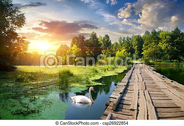 Swan near bridge - csp26922854