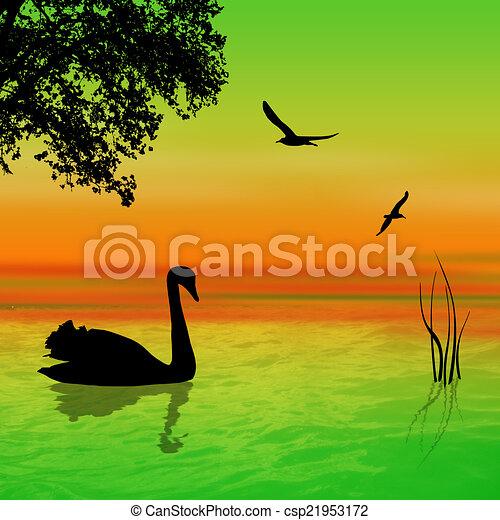 Swan on the lake - csp21953172