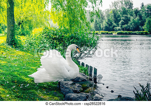 Swan on the shore - csp28522816