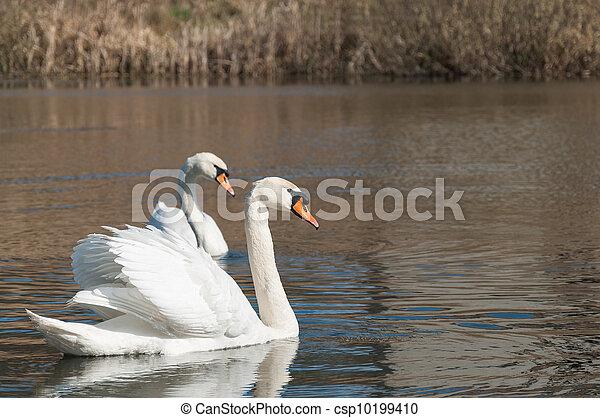 swan - csp10199410